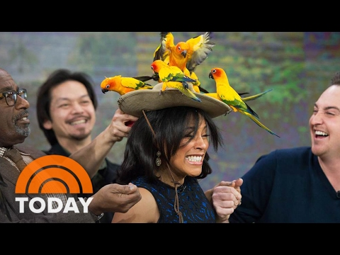 World's Most Exotic Birds Flock To Studio 1A: Owl Chick, Aracari | TODAY
