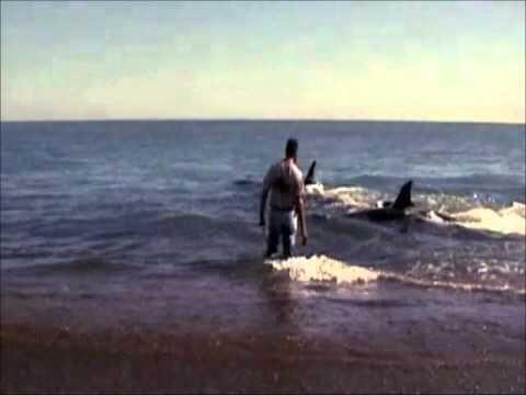 Roberto Bubas - El Amigo de Las Orcas