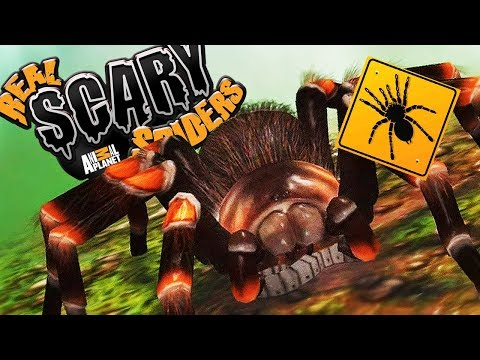 RAISE YOUR OWN PET SPIDER! 🕷️  | Animal Planet's Real Scary Spiders