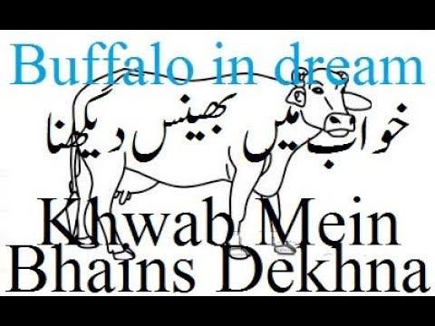 Khwab Mein Bhains Dekhna | Buffalo in dream | خواب میں بھینس دیکھنا