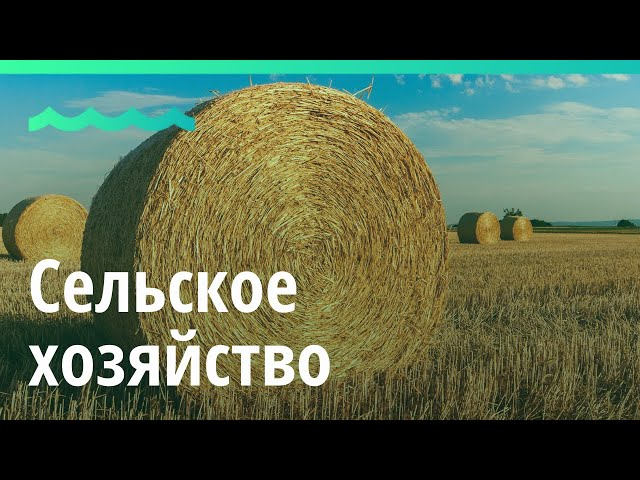 Итоги 2019 года в Алтайском крае:  сельское хозяйство