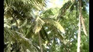 Tamil Trees Song