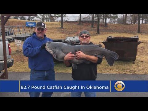 Man Catches Eighty Two Pound Catfish In Oklahoma
