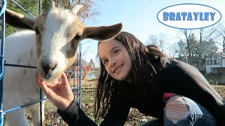 Annie's Backyard Birthday | Traveling Petting Zoo (WK 257.5) | Bratayley thumbnail