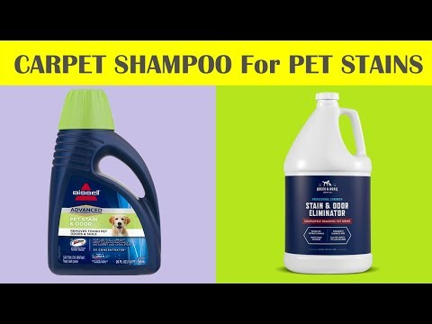 Best Carpet Shampoo for Pet Stains - Best Carpet Stain Remover