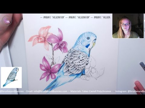 how to draw a parakeet