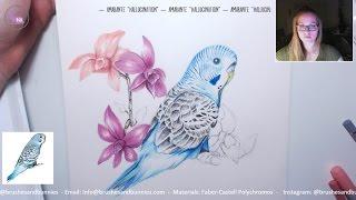 Drawing a Subscriber's Pet Bird (Budgie) - PET ART FRIDAY