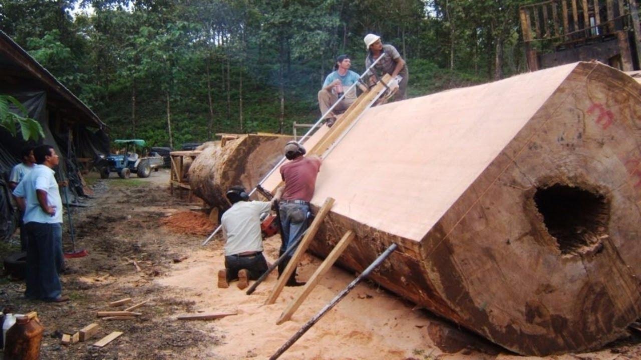 ألات تقطيع الخشب الكبير عجيبة و متطورة جدا جدا  Youtube