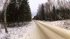 Saksanhirven metsästystä Virossa
