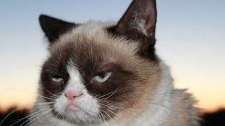 Смешные кошки 21 ● Приколы с животными 2015 - коты ● Funny cats vine compilation ● Part 21