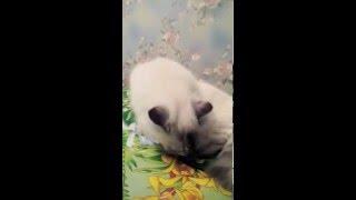 Кошка нюхает носки)))