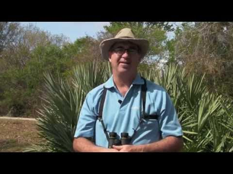 BIRDING BASICS & BEYOND: How To Use A Field Guide