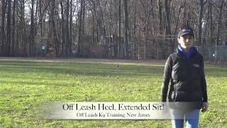 Jack Russell Beagle Mix - Dog Reactive - Off Leash Training Nj