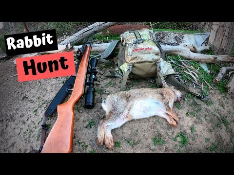 Afternoon Rabbit Hunt VIC Australia