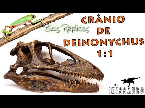 Crânio De Deinonychus Bios Réplicas