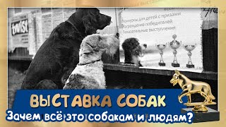 Выставка собак. Зачем это собакам и людям? (подробный гайд от Галины Меренковой)