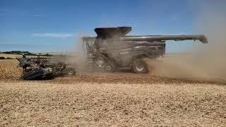 Colheita de soja fendt