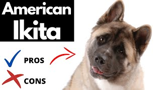 American Akita Pros And Cons | The Good AND The Bad!!