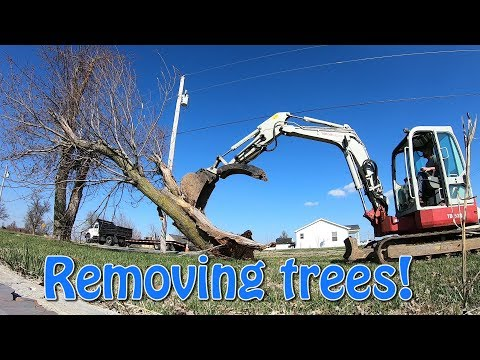 Removing Trees With Takeuchi TB153fr