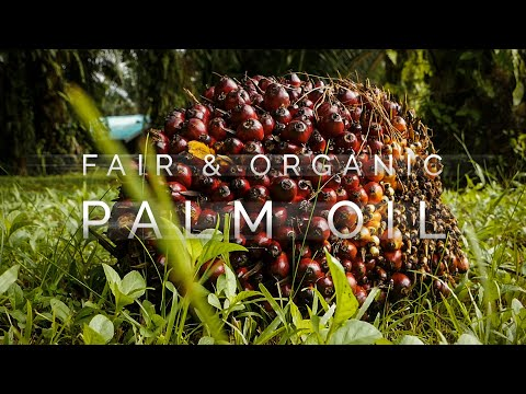 Solving The Palm Oil Problem? - Fair, Organic & Sustainable