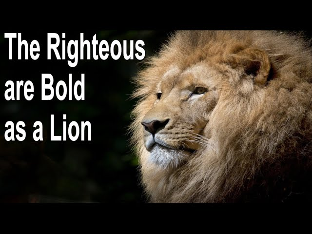 The Righteous are Bold as a Lion - John 3:16 C.C. Thursday Evening Service Live Stream 1/28/2021