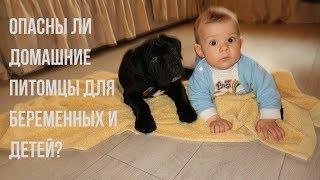 Дети и животные // Беременность и кошки // Чем могут быть опасны домашние животные?