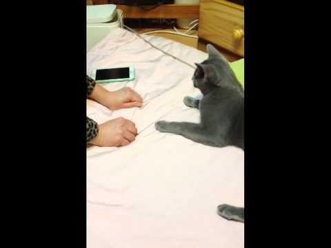 Smart Cat Finds Ball
