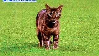 Kitten Runs On The Field