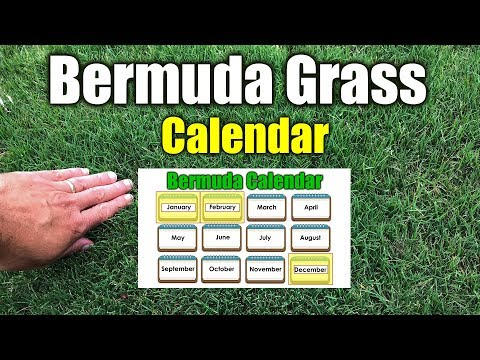 Bermuda Grass Calendar Please See New Calendar in Description