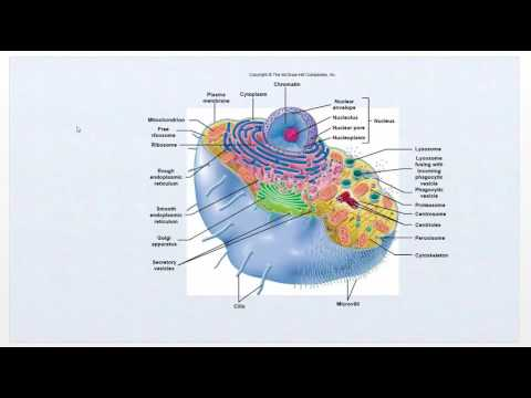 Pathophysiology - Intro Video   Cell function review - Ch1