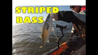 Spring Striped Bass Fishing
