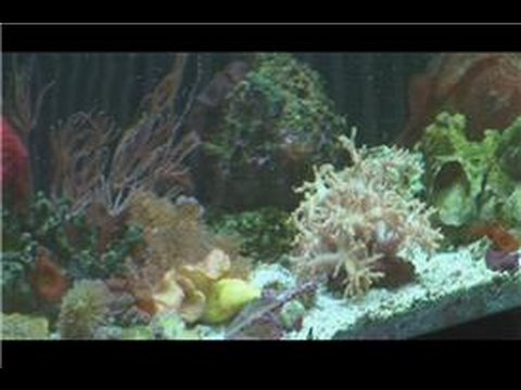 Saltwater fish tanks how to start a saltwater fish tank for How to start a saltwater fish tank