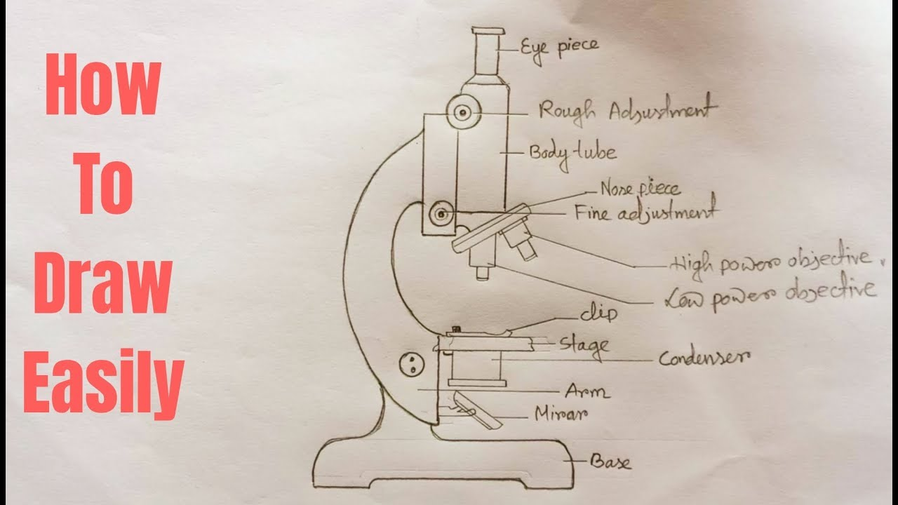 How To Draw Compound Of Microscope Easily Step By Step