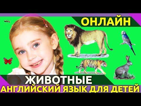 ⭐ Учим английский язык.🙉 Животные на английском языке. 25 карточек Домана по-английски для детей👍