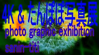 youtubeたんぽぽの花、4k写真展 Flower of adandelion photo graphic ex...