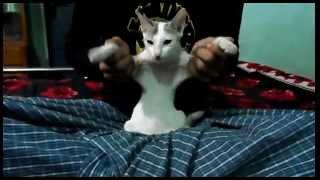 Cat Cat. Bikroy.com.