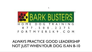 Practice Makes Permanent - Dog Training of Fort Myers K9 - Patrick Logue Dog Trainer