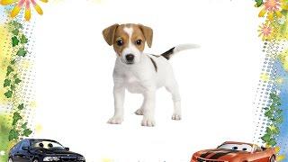 Развивающее видео для детей. Собака - верный и хороший друг/Video for children
