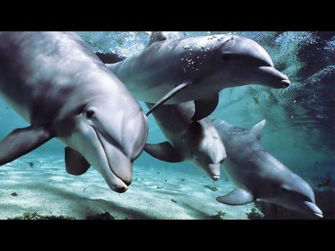 Dans la peau d'un prédateur : Oceans