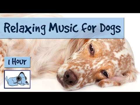 1 HOUR of Relaxing Music for Dogs, Music for Dogs and Fireworks