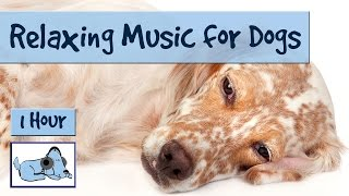 1 HOUR of relaxing music for dogs, use during fireworks, keep dogs calm.