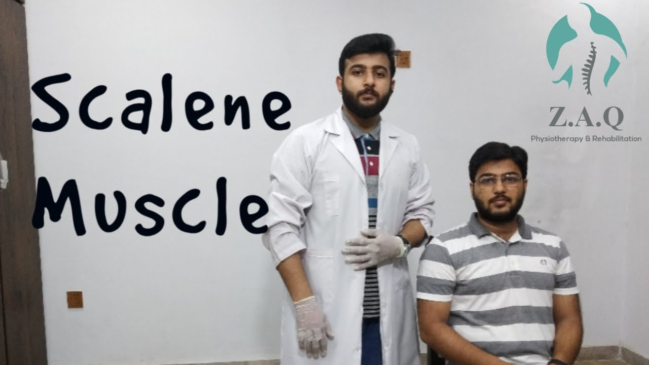 Download Scalene Muscle Anatomy | Scalene Muscle Stretch | Origin Insertion | Action | Neck Pain - Z.A.Q