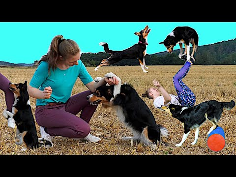 100 Dog Tricks by Border Collie Lee