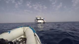 видео Golden Dolphin II