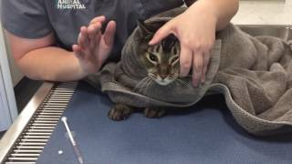 Veterinary Learning Series: Giving Oral Medication To A Cat