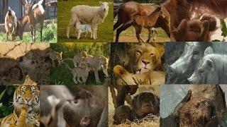 Vínculos familiares en el reino animal Documentales Naturaleza