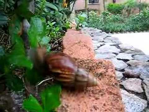 Snail feeds