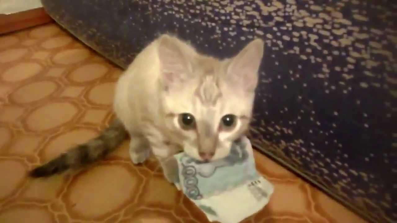 su cosa fare trading con itrader guadagnare soldi con i gattini crittografici