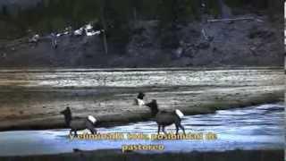 lobos cmo los lobos son capaces de cambiar el curso del ro