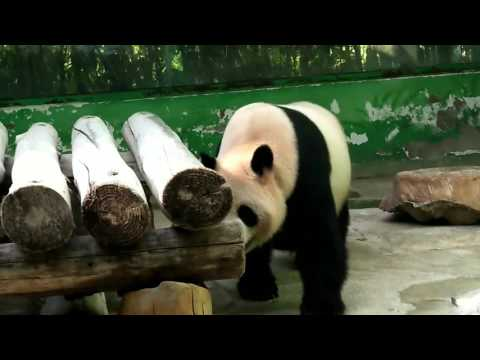 A trip to HANGZHOU-zoo